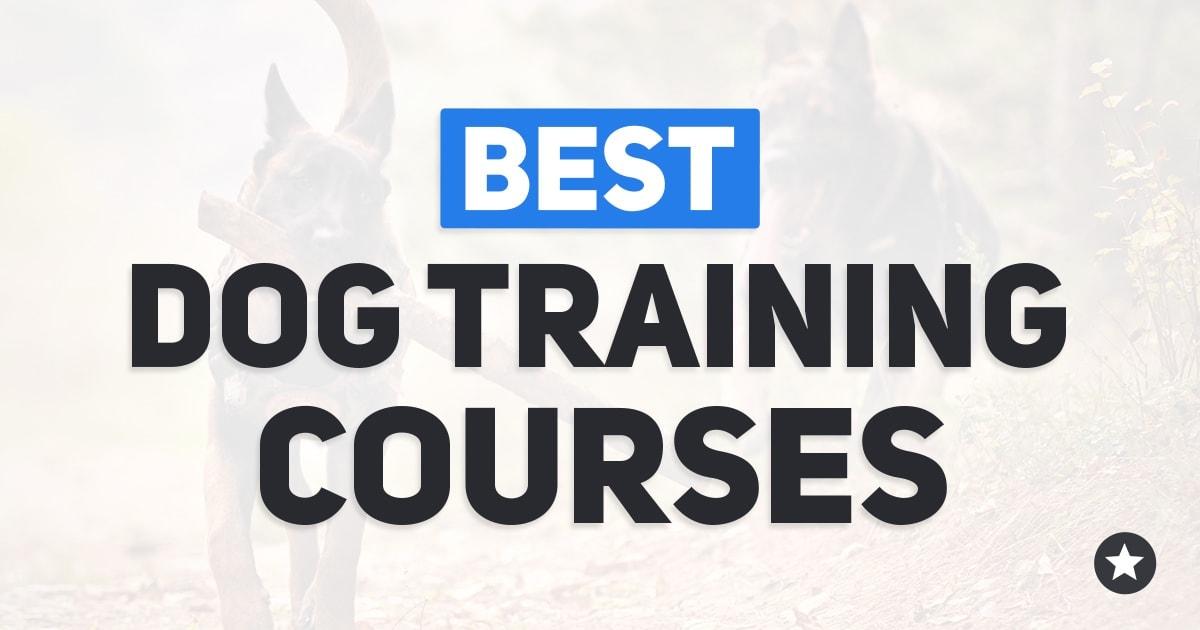Best Dog Training Courses