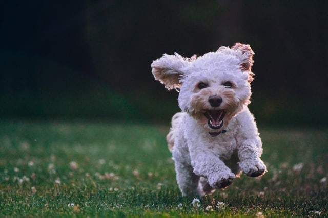 Best Puppy Training Books - 5 Picks For Your Furry Friend